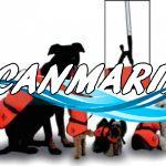 Как правильно плавать вместе с питомцем